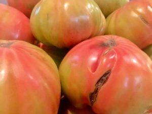 Floren Domezain, El rey de las verduras, Huerto Urbano, Navarra, Tomates, Alcachofas, Pencas, Pochas, Esparragos. Producto de Primera Calidad