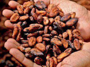 Salón-Internacional-del-Chocolate-Madrid-Granos-de-Cacao