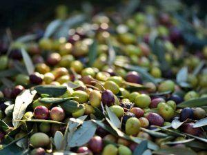 Cómete-las-Ventas-olivas