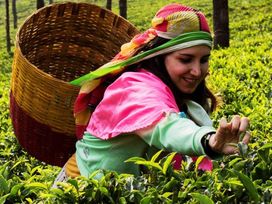 Laura-Rodríguez-Tetereta-Recolectando-té-en-la-India