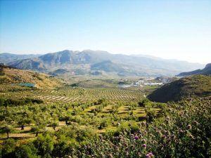 Receta-de-Cordero-al-Horno-Ensalada-de-Escarola-Sierra-Mágina
