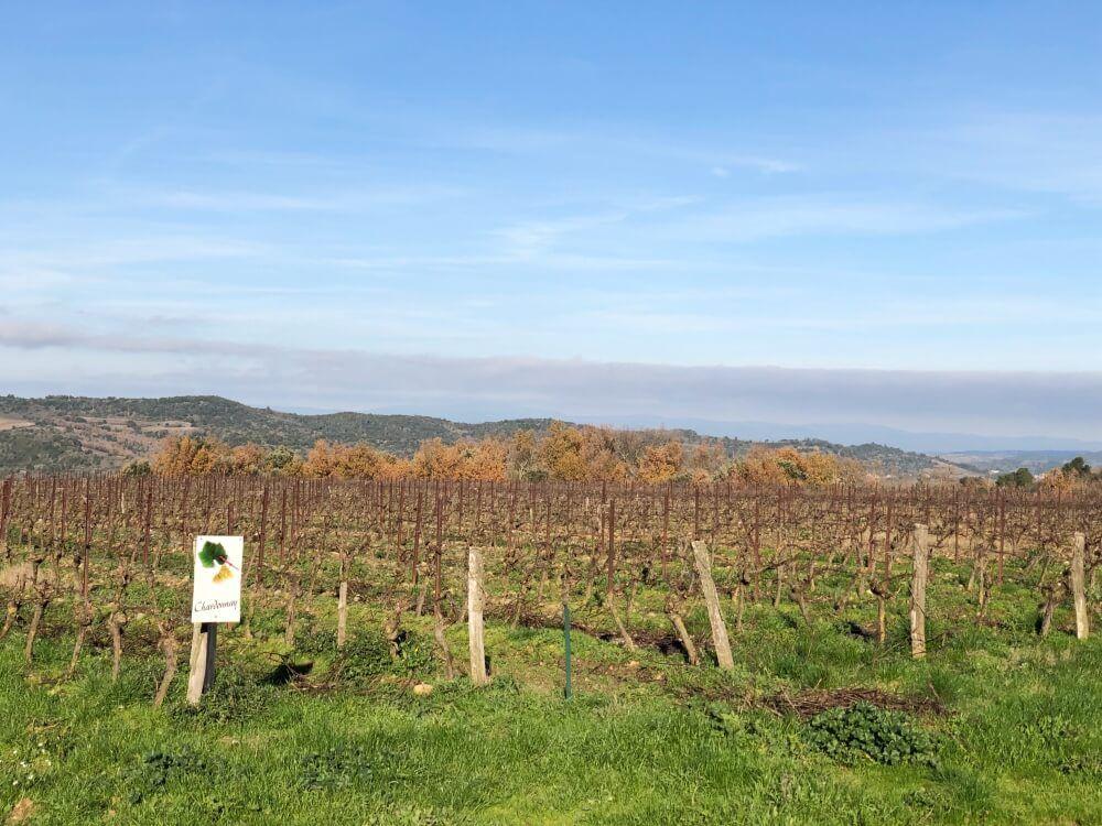 Gastronomía-Perpignan-Narbonne-Carcassonne-Bodega-Robert-de-Limoux-Viñedos