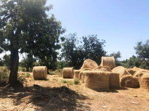 Viajar Chipre - campos