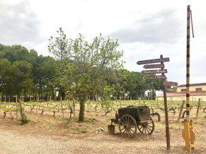 TORREZNO DE SORIA-viñedo