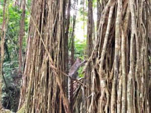 VIAJAR BALI INDONESIA monkey forest