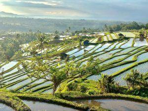 VIAJAR BALI INDONESIA JATILUWIHRICE TERRACES
