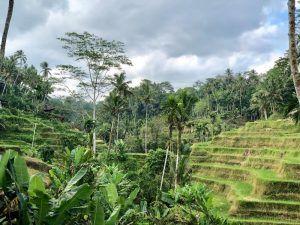 VIAJAR BALI INDONESIA tegallalang