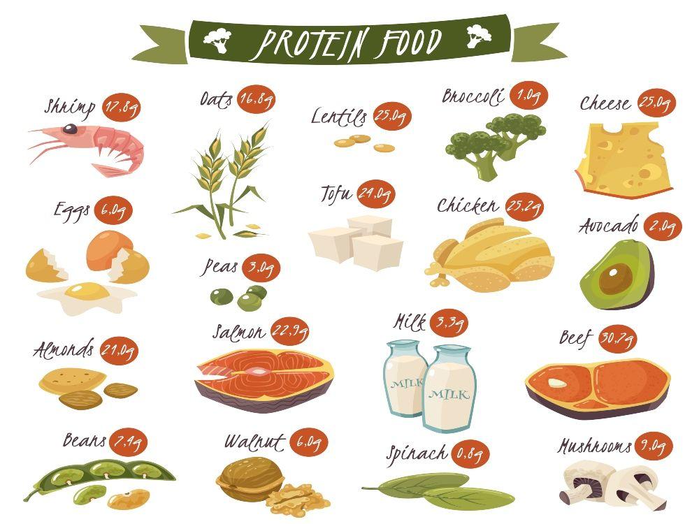 nutrición y deporte proteina