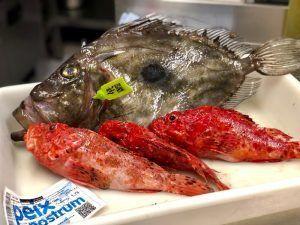 la salmorra pescado fresco