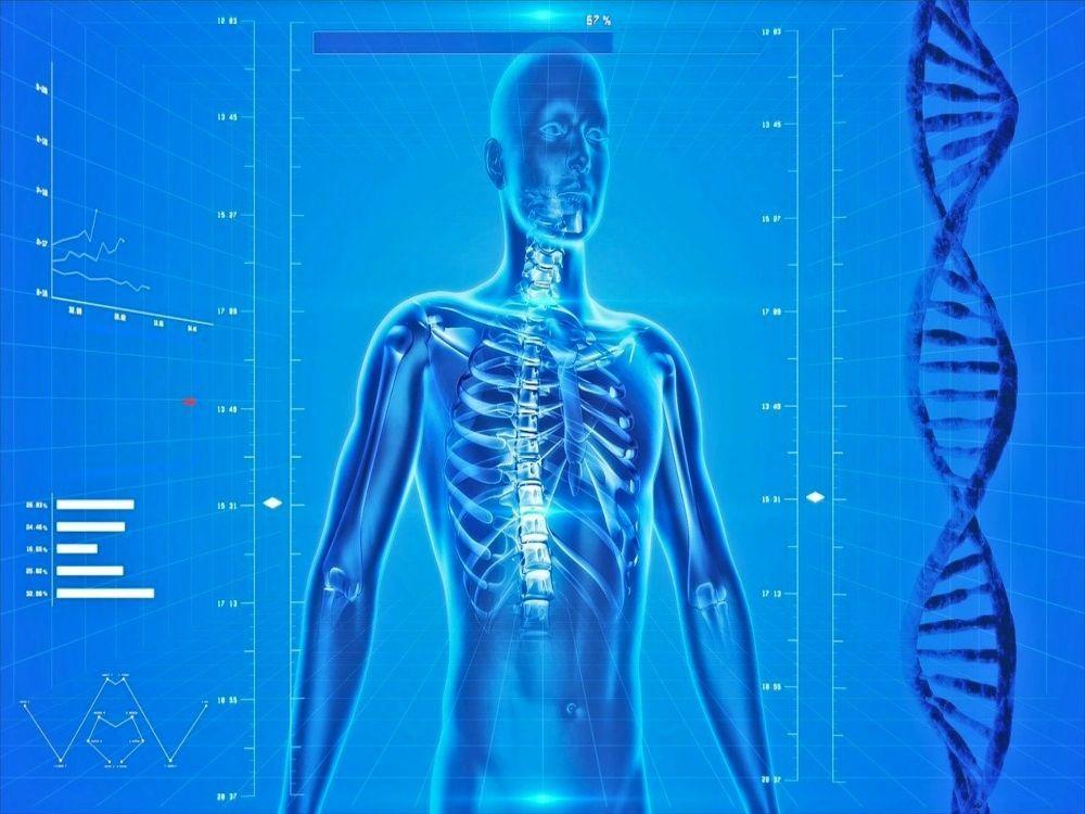 proteína en el deporte-cuerpo humano