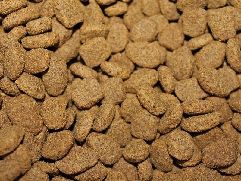 pienso comida para perros