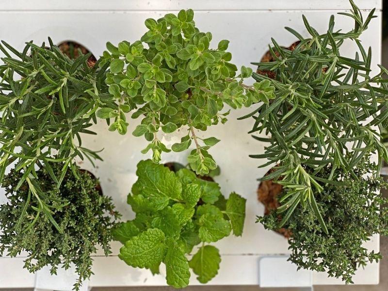 greenworks jardín vertical