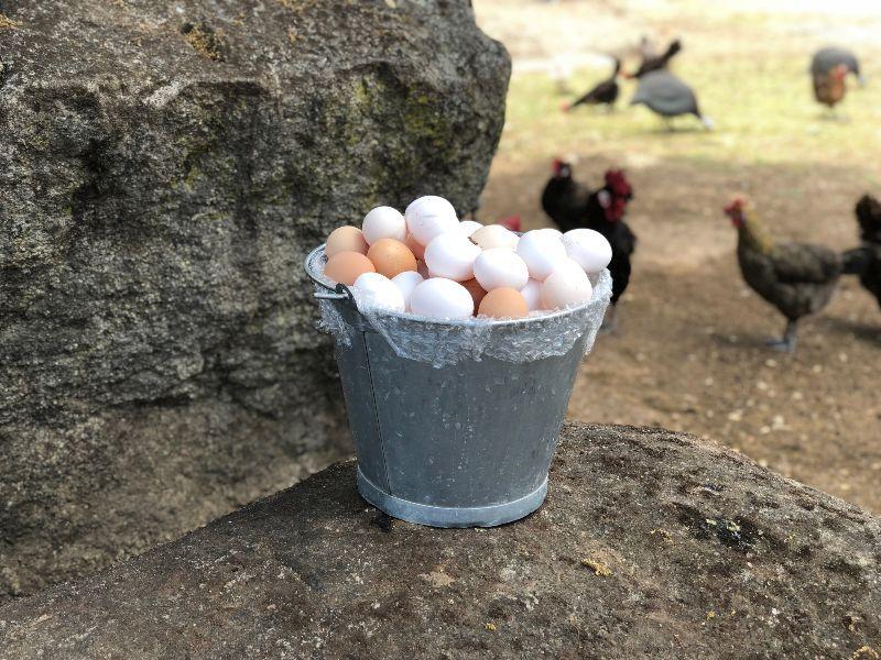 cobardes y gallinas comprar productos gourmet