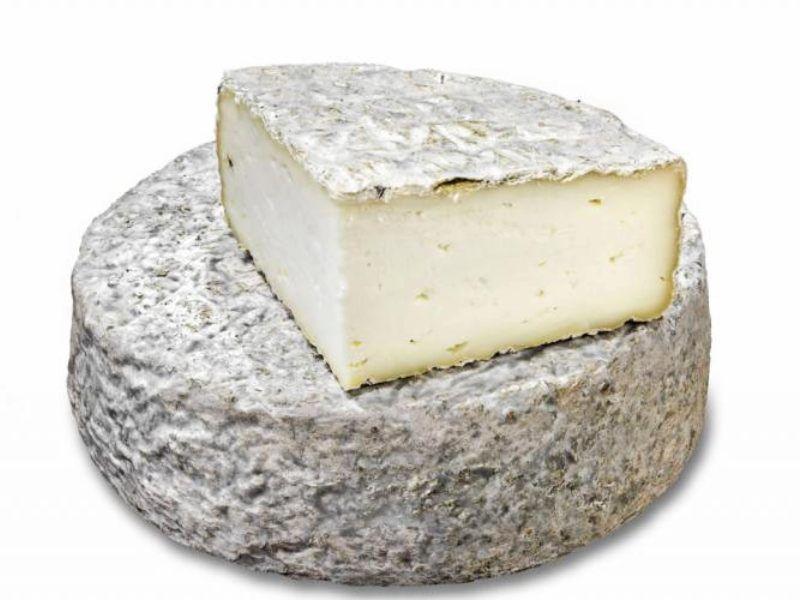 quesería cultivo comprar quesos online