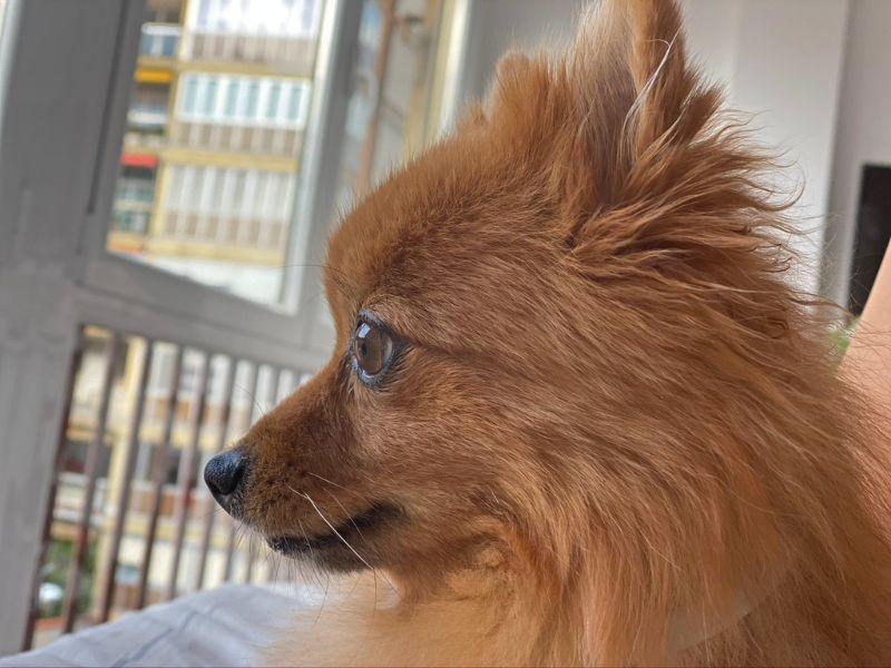 mascotas perros CBD