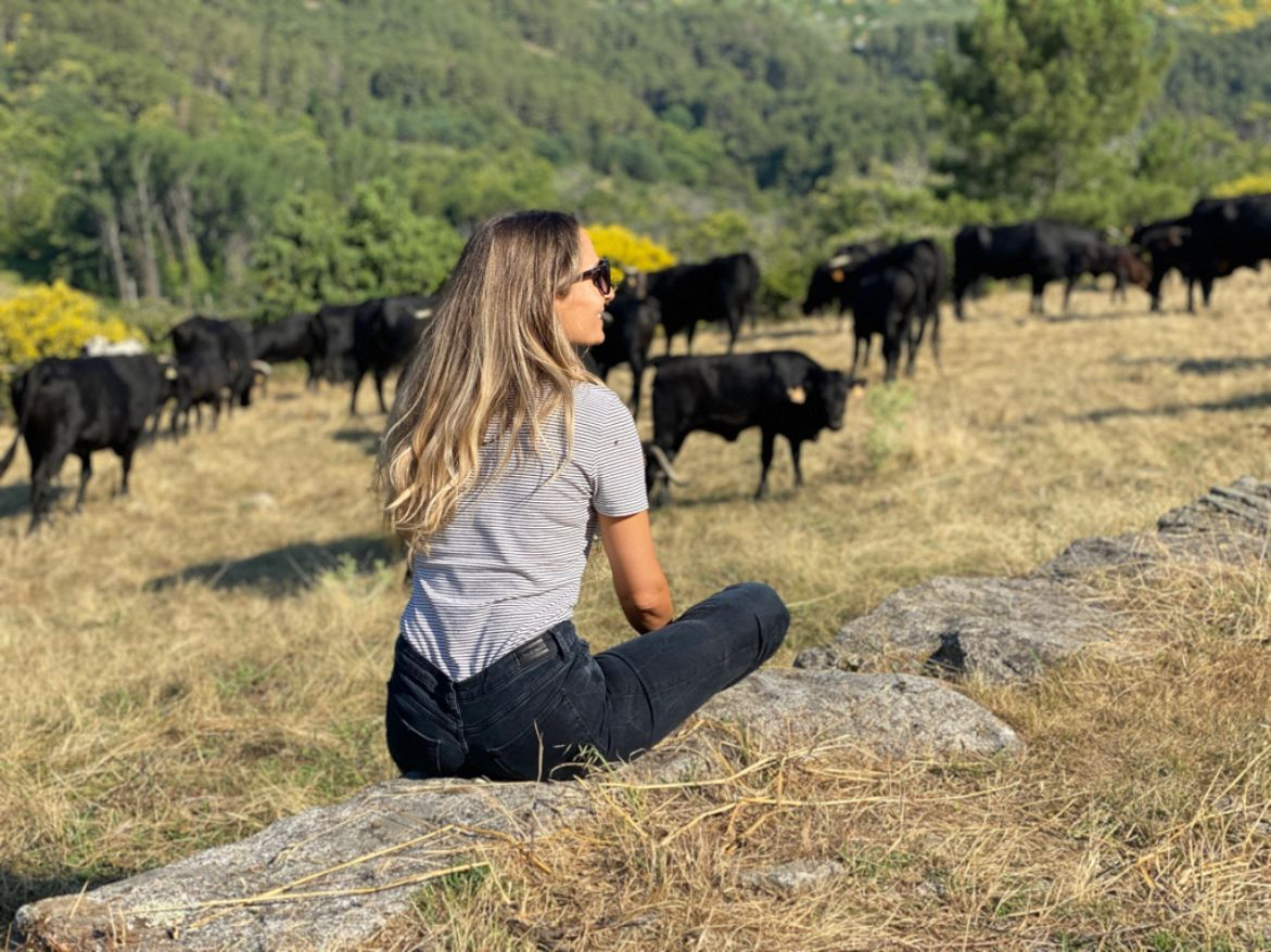 trashumancia de ganado